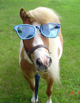 funny_horse